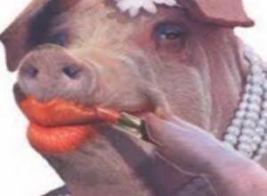 Photo of Happy Piggy Rainbows Lyrics – Oinker