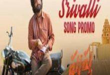 Photo of SRIVALLI Lyrics – PUSHPA Movie